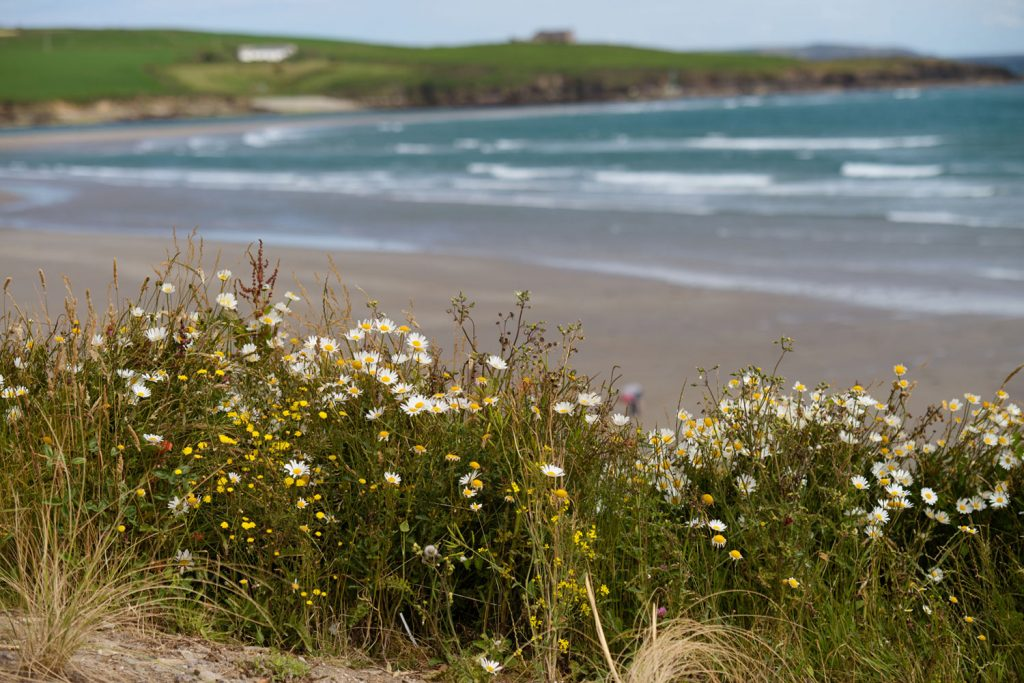 Sustainable – One of Cork's many picturesque beaches. Cork – a maritime haven.
